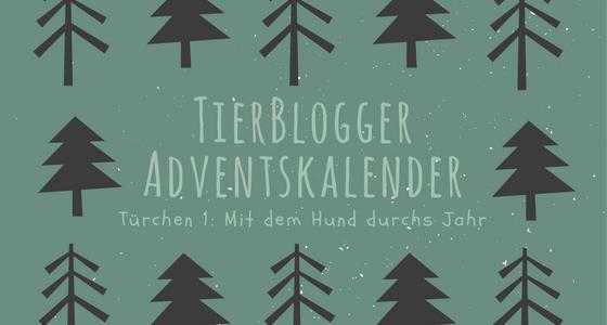 TierBlogger Adventskalender Türchen 1: Mit dem Hund durch die Jahreszeiten