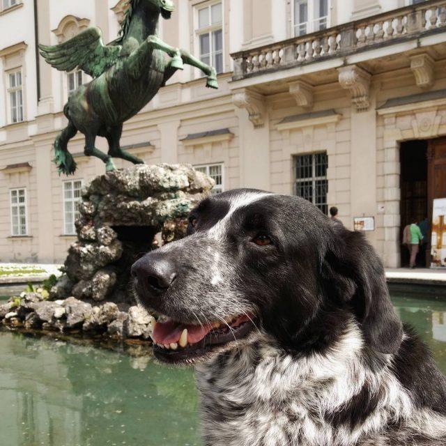 Mika vor dem Schloss Mirabell in Salzburg Sightseeing ist auchhellip